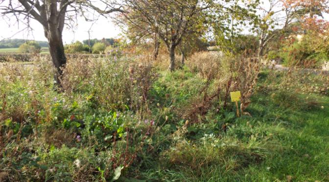 Combwich Wildflower Report 2014